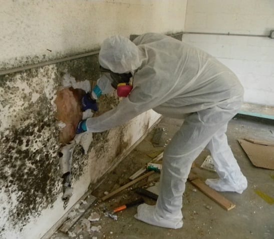 mold remediation work in NYC
