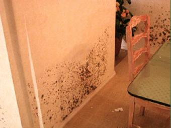 Property-Damage5