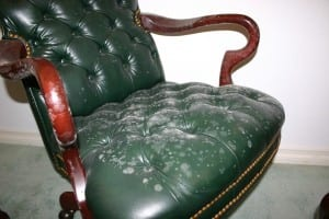 Dry Ease Mold Removal House With Mold Furniture
